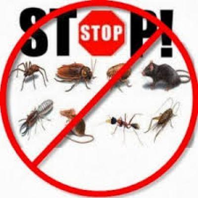 شركة مكافحة حشرات بابها