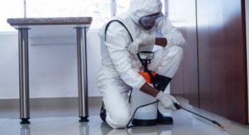 شركة مكافحة حشرات بالدام